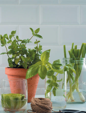 How to regrow herbs and vegetables