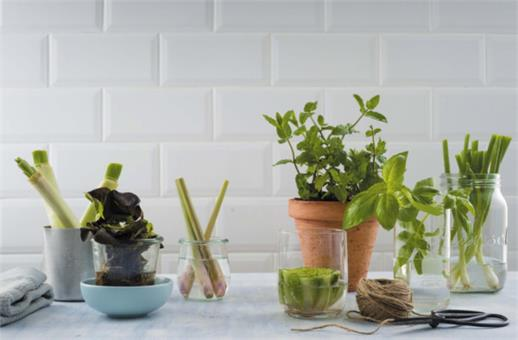 Easiest herbs and vegetables to regrow