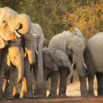 Know your National Parks – Kruger National Park