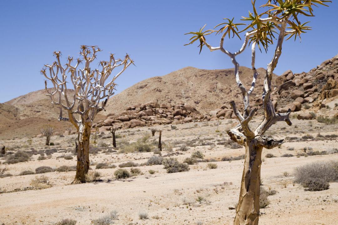 Richtersveld Transforntier Park Desert