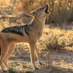 Know your National Parks – Kgalagadi Transfrontier Park