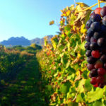 WIN a collection of outstanding syrah from Haskell Vineyards